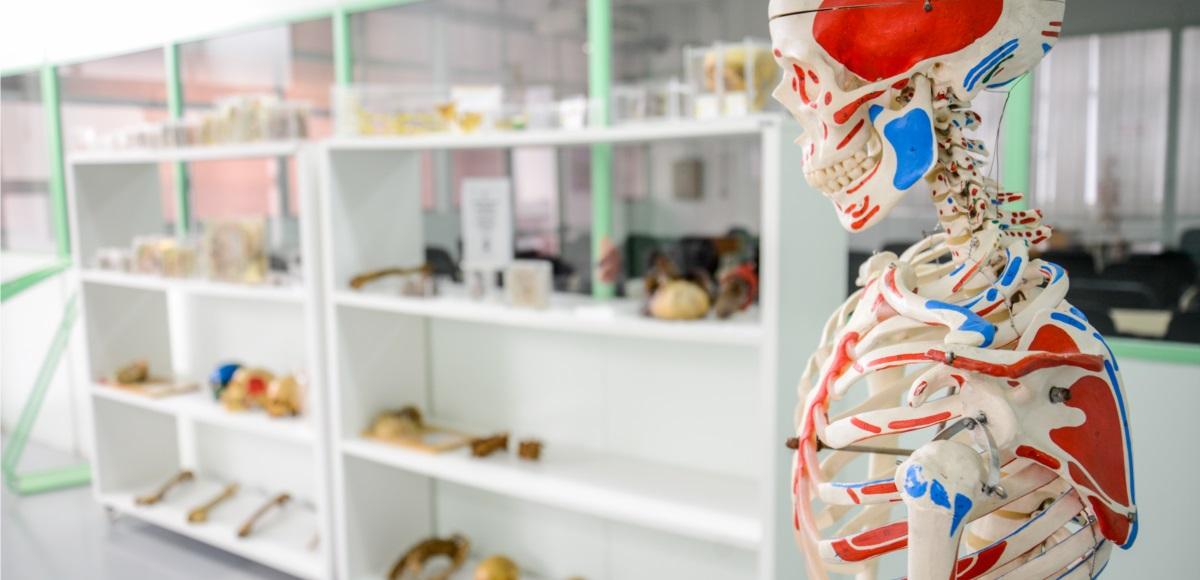 Laboratório de Anatomia-34