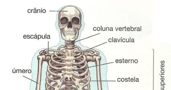 52d048ddf3d18-ossos-do-corpo-humano